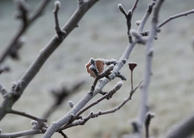 frost-1046466_960_720
